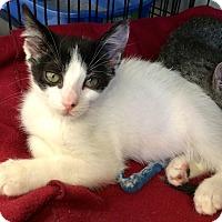 Adopt A Pet :: Pastina - Island Park, NY