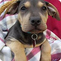 Adopt A Pet :: Jean Pup - Klein - Adopted! - San Diego, CA