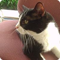 Adopt A Pet :: Maddie - Muscatine, IA