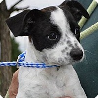 Adopt A Pet :: RePeet - Mt. Prospect, IL