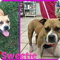 Adopt A Pet :: Sweetie - Beaumont, TX