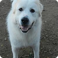 Adopt A Pet :: HARRIS - Granite Bay, CA