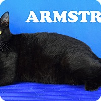 Adopt A Pet :: Armstrong - Carencro, LA