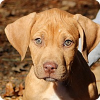 Adopt A Pet :: Anson~adopted! - Glastonbury, CT