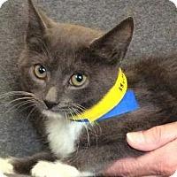Adopt A Pet :: Neeko - Chattanooga, TN