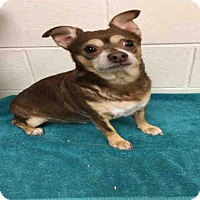Adopt A Pet :: COCO - Upper Marlboro, MD