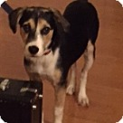 Adopt A Pet :: Ellie's Essex