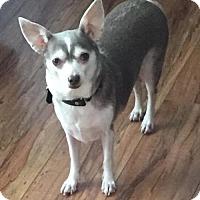 Adopt A Pet :: Mammacita - Costa Mesa, CA