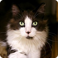 Adopt A Pet :: Mortimer - Kettering, OH