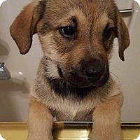 Adopt A Pet :: Rain - Aurora, CO