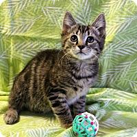Adopt A Pet :: Roman - Greensboro, NC