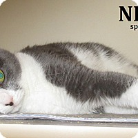 Adopt A Pet :: Nettie - Elizabeth City, NC
