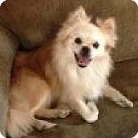 Adopt A Pet :: Ziggy - Russellville, KY