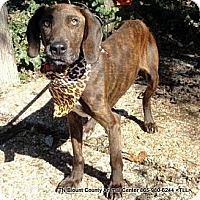 Adopt A Pet :: Sarah - Hop Bottom, PA