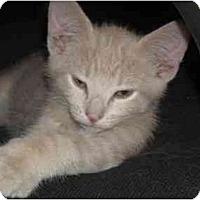 Adopt A Pet :: Keno - Irvine, CA