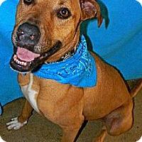 Adopt A Pet :: Vegas - Converse, TX