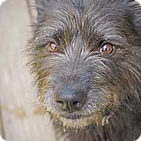 Adopt A Pet :: Bono - Richmond, VA