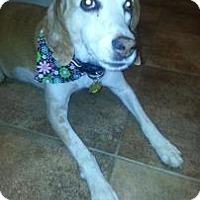 Adopt A Pet :: Tula - Phoenix, AZ