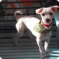 Adopt A Pet :: Snuggs - Post, TX