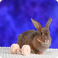 Adopt A Pet :: Leelu - Marietta, GA
