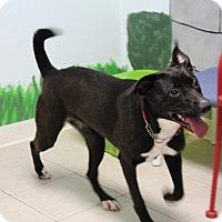 Adopt A Pet :: Glory - Elyria, OH