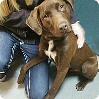 Adopt A Pet :: Hershey - Ogden, UT