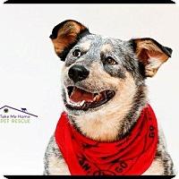 Adopt A Pet :: Juliette - Richardson, TX