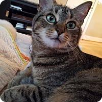 Adopt A Pet :: Tori - Wilmington, NC