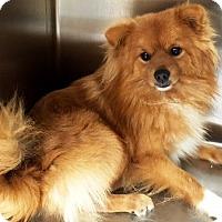 Adopt A Pet :: Tinkerbelle & Mufassa