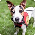 Adopt A Pet :: Winnie (Has application)