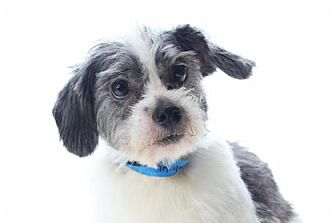 Terrier (Unknown Type, Small) Mix Dog for adoption in Colorado Springs, Colorado - Bennett