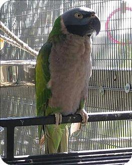 Parakeet - Other for adoption in Elizabeth, Colorado - Sophie