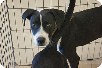 Hound (Unknown Type) Mix Dog for adoption in Smithtown, New York - Bellisima