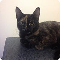 Adopt A Pet :: River - Portland, ME