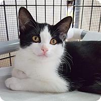 Adopt A Pet :: Carls - Toronto, ON