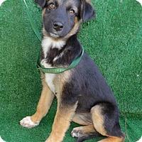 Adopt A Pet :: Jayne - San Diego, CA