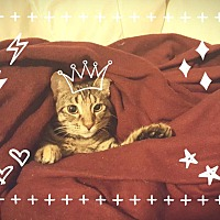 Adopt A Pet :: Reina - Mansfield, TX