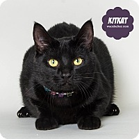 Adopt A Pet :: Kit Kat - Wyandotte, MI