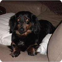 Adopt A Pet :: Millie - Staunton, VA