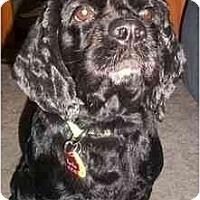 Adopt A Pet :: Madison - Arlington, TX