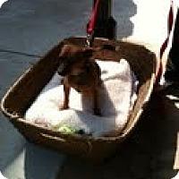 Adopt A Pet :: Rusty - Modesto, CA