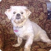 Adopt A Pet :: Gretchen - Osseo, MN