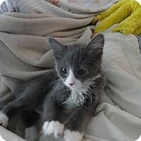 Adopt A Pet :: Linzy - Colmar, PA