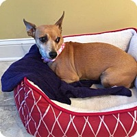 Adopt A Pet :: Lilly - S. Pasedena, FL