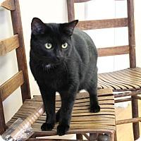 Adopt A Pet :: Pinky aka Salem - Knoxville, TN