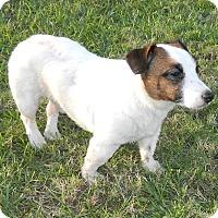 Adopt A Pet :: Bentlie - Umatilla, FL