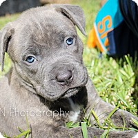 Adopt A Pet :: Lexi - Miami, FL