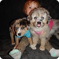 Adopt A Pet :: Serena - Waldorf, MD