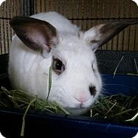 Adopt A Pet :: Caesar - Chula Vista, CA