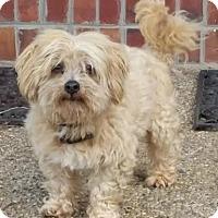 Adopt A Pet :: Pogo - Georgetown, KY